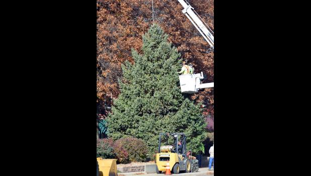 Harlan Municipal Utilities and City of Harlan crews put the official Shelby County Christmas Tree in place and string it with lights Wednesday, Nov. 16 on the east side of the courthouse square.  The tree will light up and kick off the season at the annual holiday lighting festival slated for Saturday, Nov. 26.