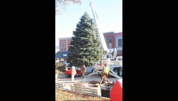 Harlan Municipal Utilities and City of Harlan crews put the official Shelby County Christmas Tree in place and strung it with lights Wednesday, Nov. 14 on the east side of the courthouse square.  The tree will light up and kick off the season at the annual holiday lighting festival slated for Saturday, Nov. 25.  The tree this year was donated by Betty Larsen.